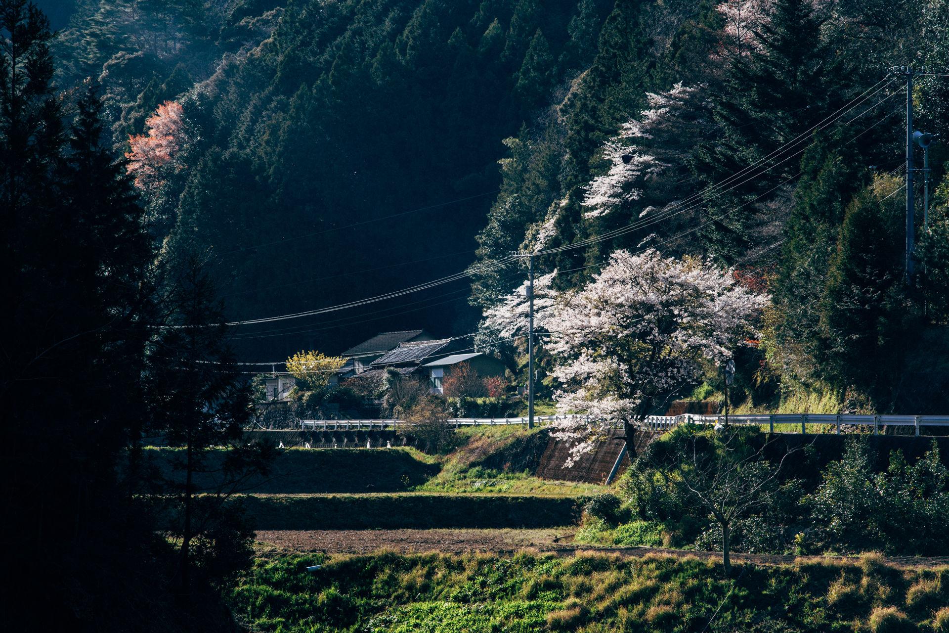 Kōchi – 高知県